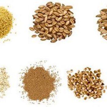 Cereales et Mais