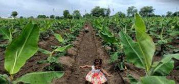 Ecologie agraire