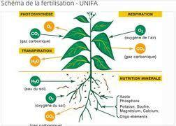 Fertilisation des sols