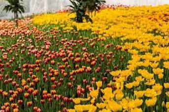 Horticulture spécial