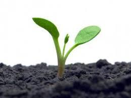 Physiologie végétale et développement