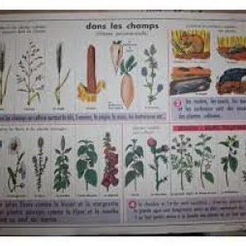 Plante nuisible & connaissance fourragère