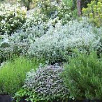 Plantes et culture d'ornement