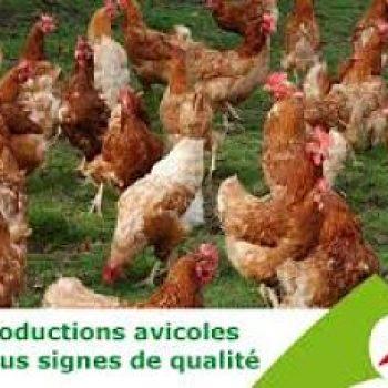 Productions avicoles