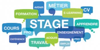 Stage professionnel (optionnel)
