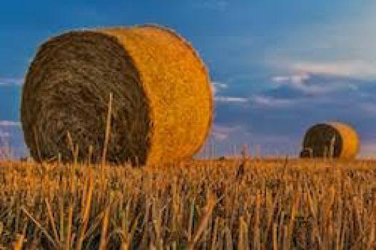 Introduction à l'agriculture