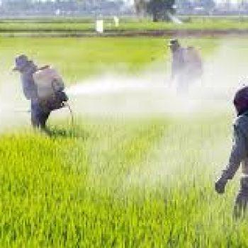 Pesticides et environnement