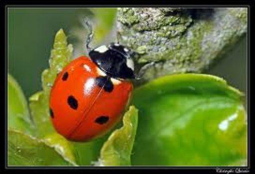 Entomologie agricole